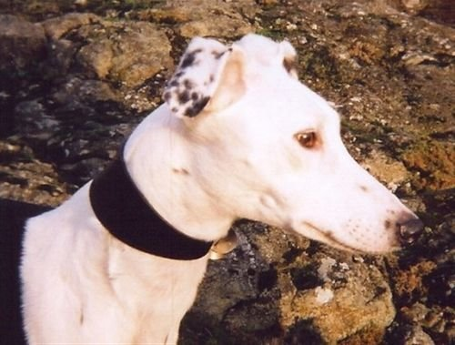 Chester, sponsor dog at GWRE